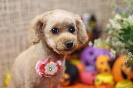 10月17日ご来店のワンちゃんです!!_b0130018_21091404.jpg