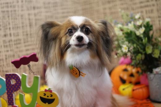 10月17日ご来店のワンちゃんです!!_b0130018_21130412.jpg