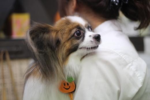 10月17日ご来店のワンちゃんです!!_b0130018_21141225.jpg