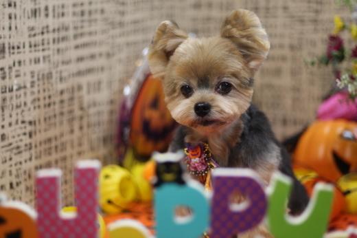 10月17日ご来店のワンちゃんです!!_b0130018_21163708.jpg