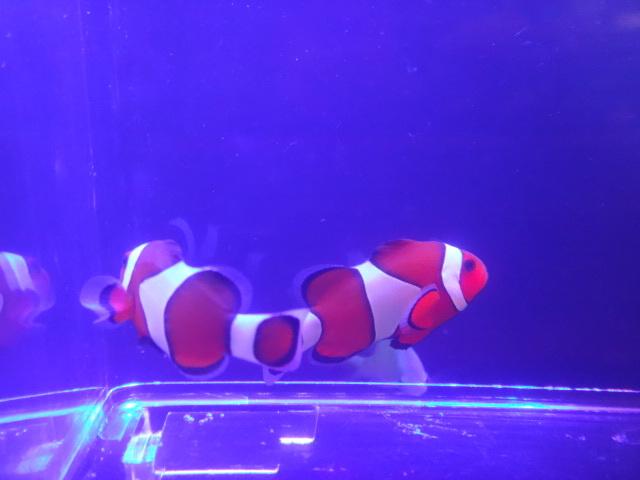 181017 海水魚 淡水魚 水草_f0189122_12243836.jpg