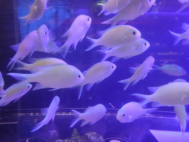 181017 海水魚 淡水魚 水草_f0189122_12252780.jpg