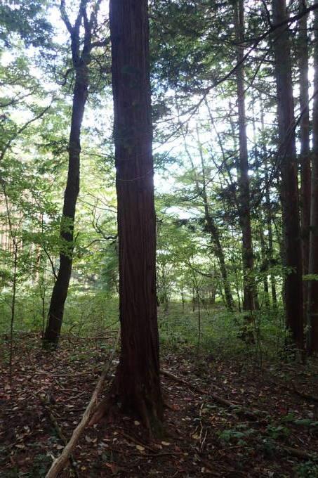 森の中へ_c0116631_08361455.jpg