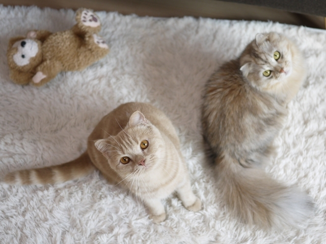 猫のお留守番 ビスコくんパピコくん編。_a0143140_21014856.jpg