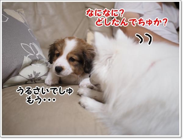 d0013149_00142601.jpg