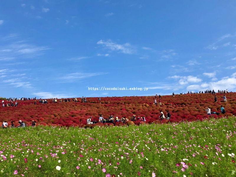 コキアの紅葉*2018♪_d0367763_21445727.jpg