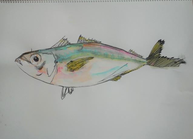 魚(アジ)の写生_e0317274_08453112.jpg
