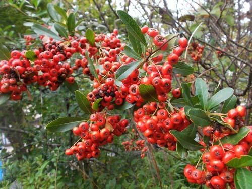 今朝の庭のようす_f0019498_08563073.jpg