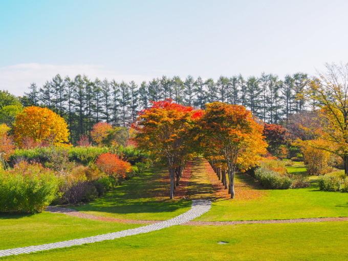 秋深まった美術村庭園と新札内丘陵からポロシリ岳_f0276498_22335800.jpg