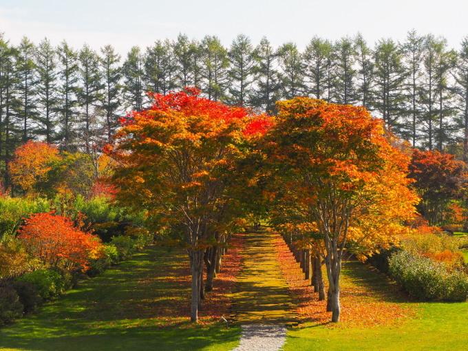 秋深まった美術村庭園と新札内丘陵からポロシリ岳_f0276498_22431430.jpg