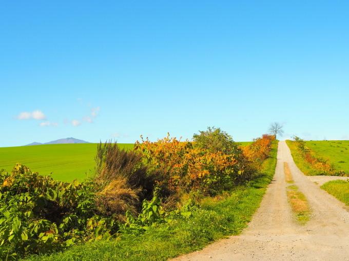 秋深まった美術村庭園と新札内丘陵からポロシリ岳_f0276498_22570576.jpg