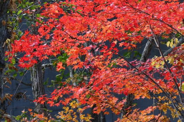 恵庭渓谷の紅葉Ⅰ_c0360399_22332417.jpg