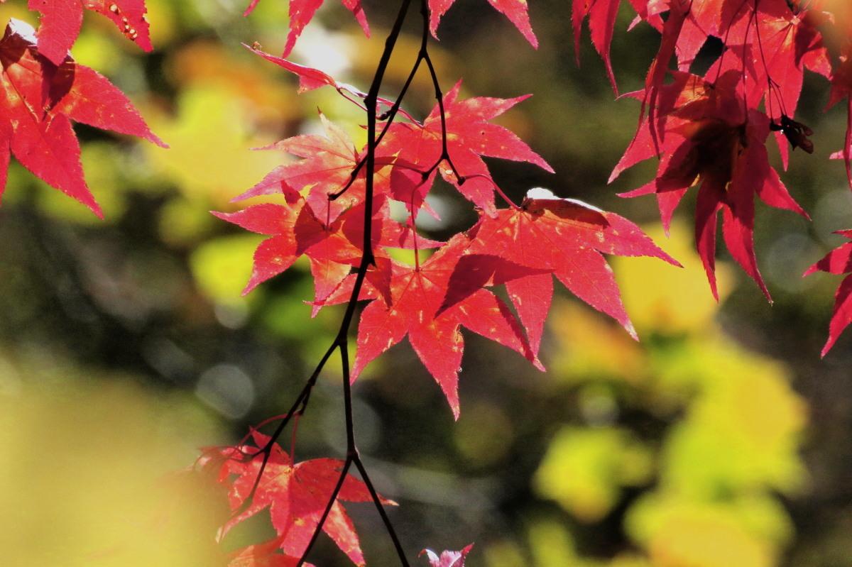恵庭渓谷の紅葉Ⅰ_c0360399_22334509.jpg