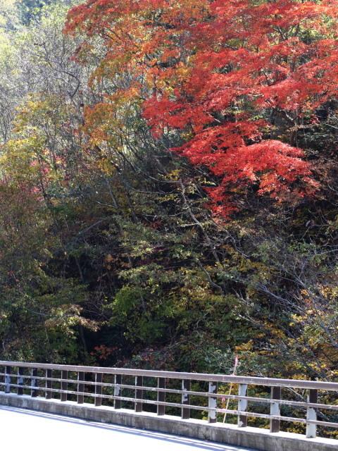 恵庭渓谷の紅葉Ⅰ_c0360399_22445966.jpg