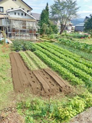 兼業農家の家庭菜園は今・・・_c0336902_12230190.jpg