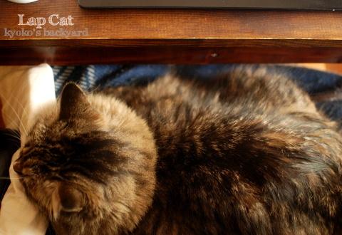 膝猫のシーズン♪_b0253205_12243729.jpg