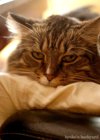 膝猫のシーズン♪_b0253205_12250227.jpg