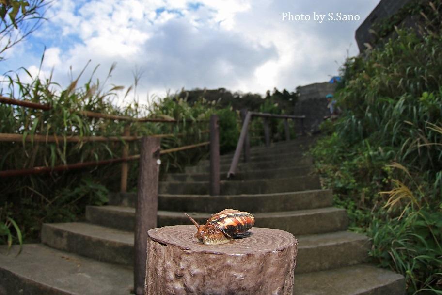 伊豆大島の旅_b0348205_01075577.jpg