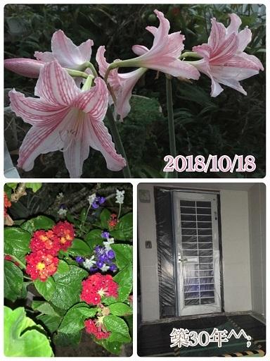 f0162908_19540513.jpg