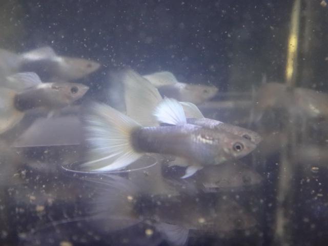 181018 熱帯魚 めだか 水草_f0189122_12594153.jpg