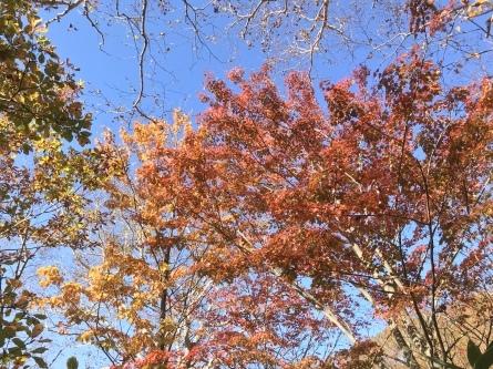 紅葉シーズンの那須岳へ_f0101226_23205279.jpeg