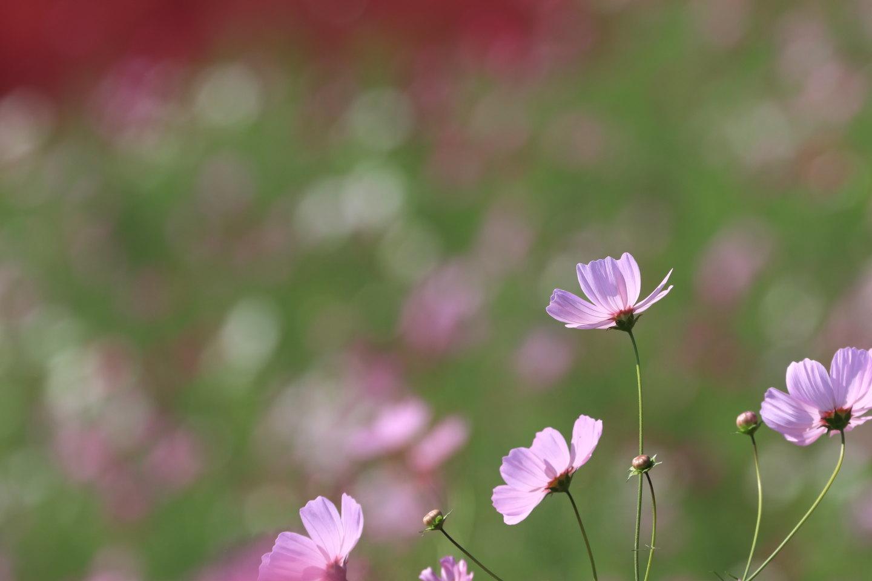 b0189733_22111877.jpg