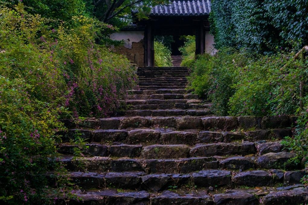 萩の寺~百毫寺(奈良市)_e0363038_14161415.jpg