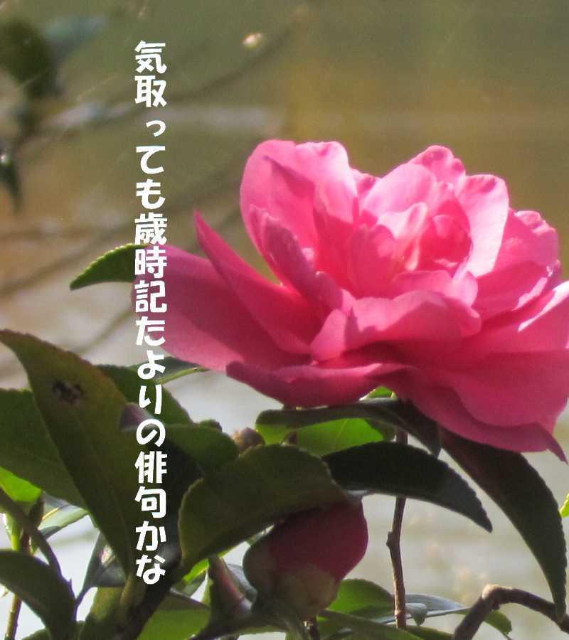 f0117041_06145395.jpg