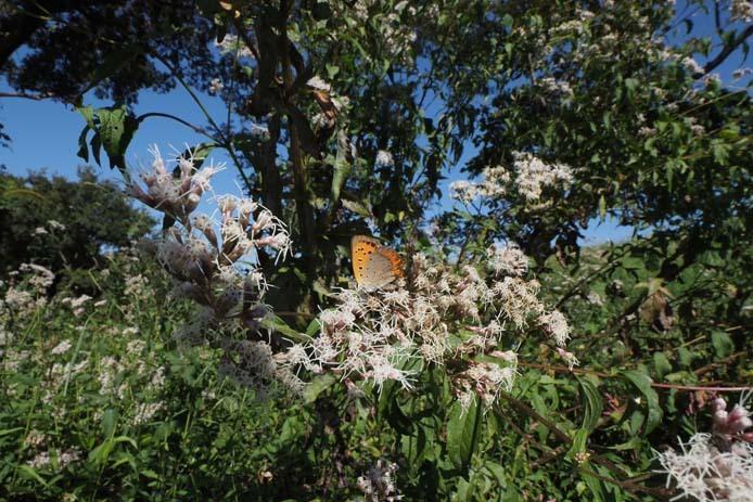 力強く吸蜜する蝶たち_d0149245_15261593.jpg