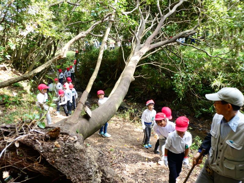 鳴滝小学校2年生遠足のサポート・・・うみべの森_c0108460_17170639.jpg