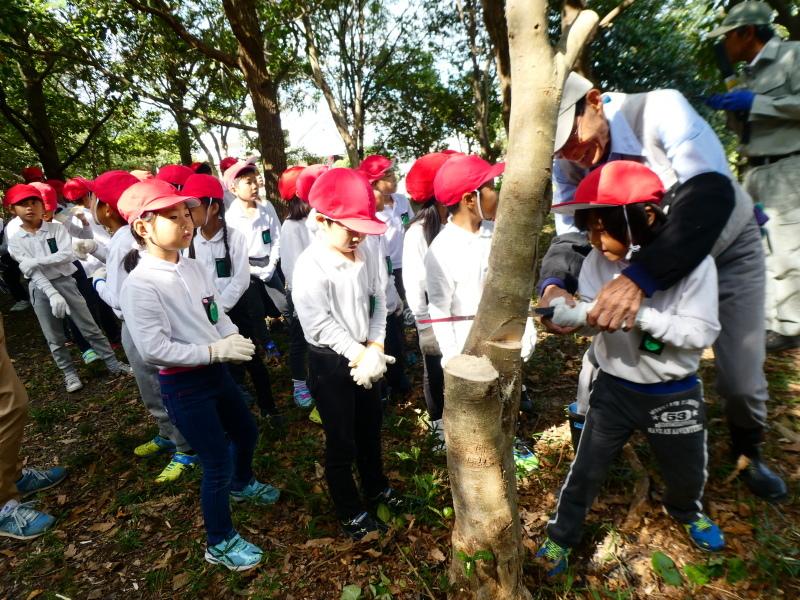 鳴滝小学校2年生遠足のサポート・・・うみべの森_c0108460_17204123.jpg