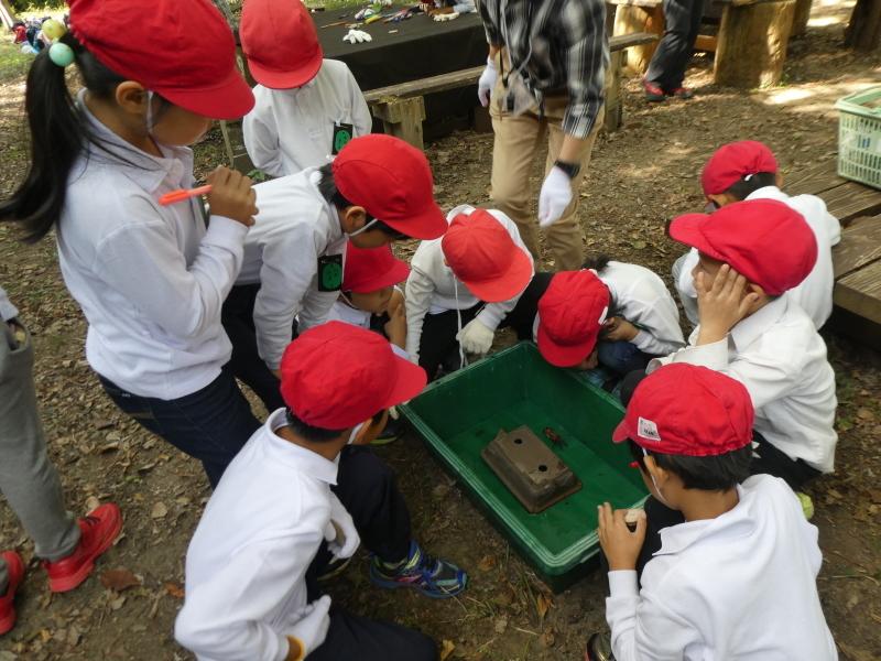 鳴滝小学校2年生遠足のサポート・・・うみべの森_c0108460_17240020.jpg