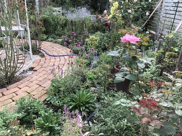10月の庭「メインガーデンの様子」_a0243064_17284741.jpg