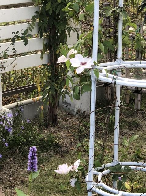 10月の庭「メインガーデンの様子」_a0243064_17393758.jpg
