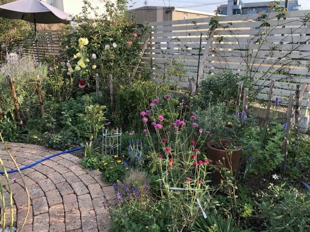 10月の庭「メインガーデンの様子」_a0243064_17402833.jpg