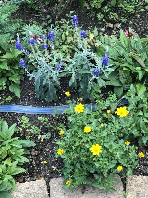 10月の庭「メインガーデンの様子」_a0243064_17413659.jpg