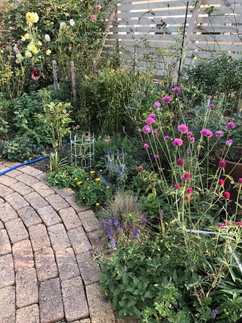 10月の庭「メインガーデンの様子」_a0243064_17431371.jpg