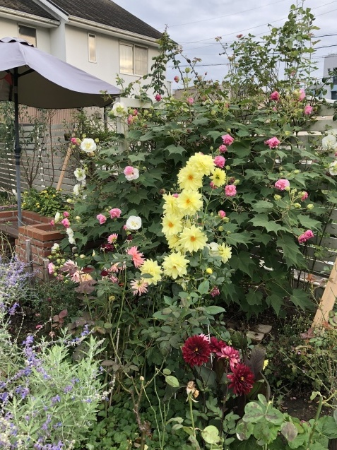 10月の庭「メインガーデンの様子」_a0243064_17461641.jpg