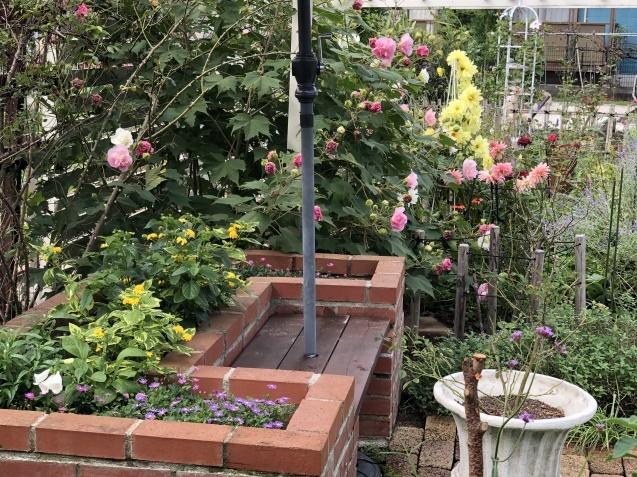10月の庭「メインガーデンの様子」_a0243064_17484094.jpg