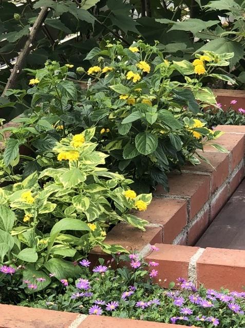 10月の庭「メインガーデンの様子」_a0243064_17485848.jpg