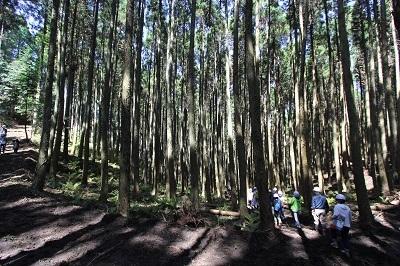 森林ツアーのごあんない。_b0112371_18010136.jpg