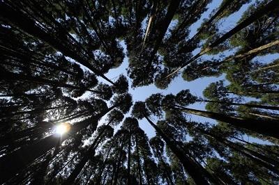 森林ツアーのごあんない。_b0112371_18011054.jpg