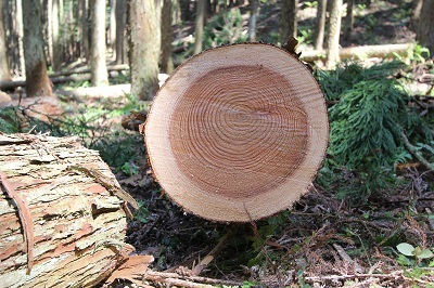 森林ツアーのごあんない。_b0112371_18065322.jpg