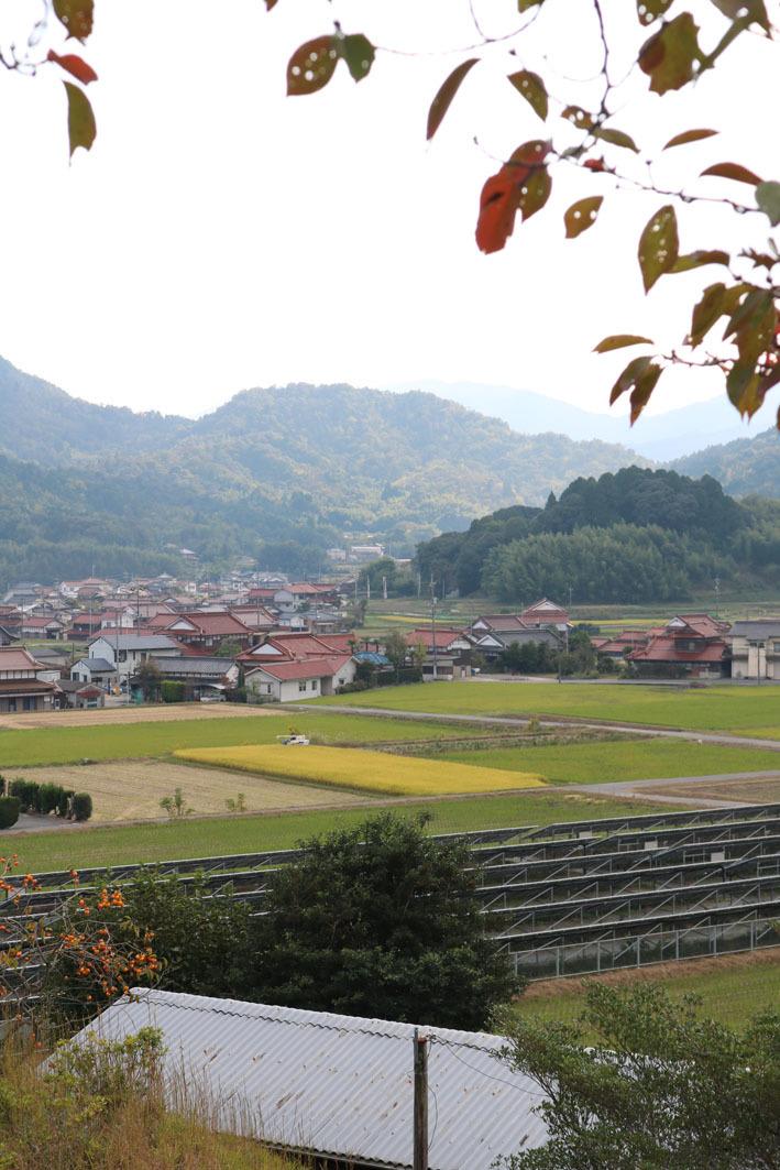 秋色ノリウツギと裏山から見える風景_c0334574_19230373.jpg