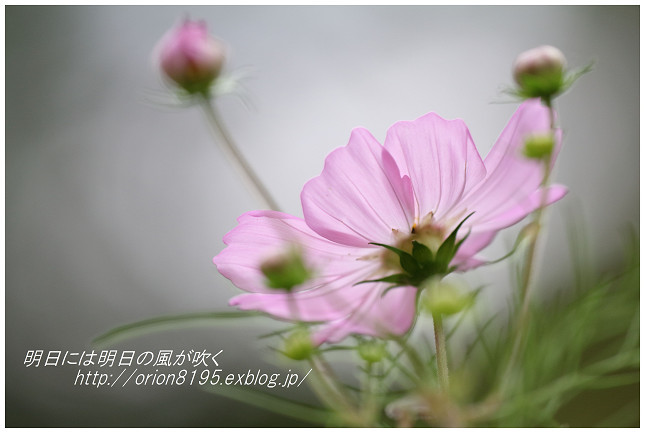 f0361079_19071975.jpg