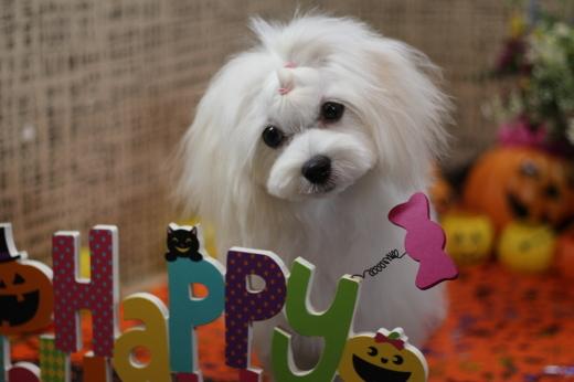 10月16日ご来店の、わんちゃんです!!_b0130018_22425896.jpg