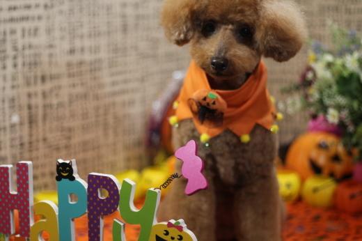 10月16日ご来店の、わんちゃんです!!_b0130018_22453207.jpg