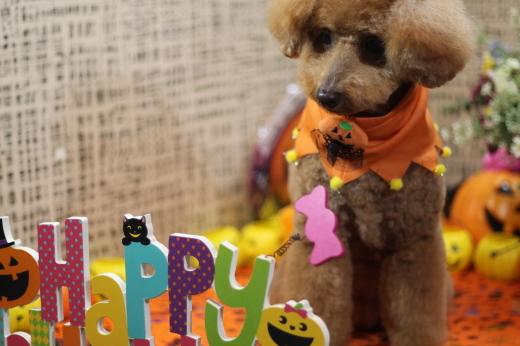 10月16日ご来店の、わんちゃんです!!_b0130018_22455031.jpg