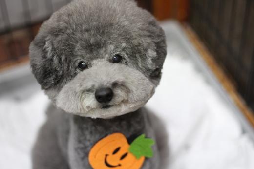 10月18日ご来店のワンちゃんです!!_b0130018_22593550.jpg