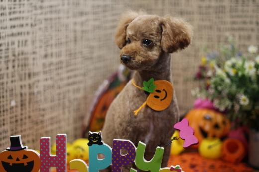 10月18日ご来店のワンちゃんです!!_b0130018_23080511.jpg
